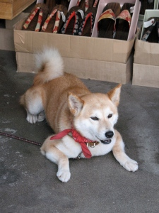 dog of the geta shop