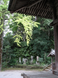Ryougoji Temple-gingko branch
