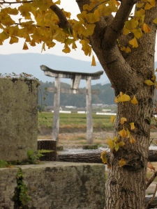 torii gate and gingko tree