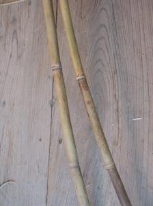 Nemagaridake poles
