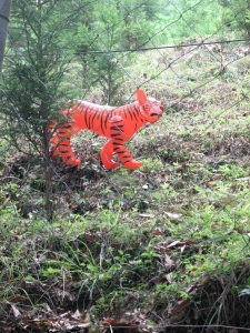 tiger in the woods