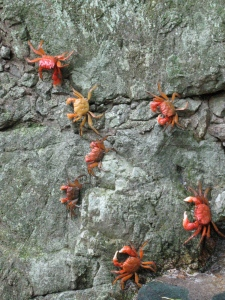 River crabs on the wall