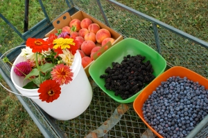 Berries, peaches & flowers picked at Sauvie Island