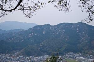 山桜 Wild cherry trees