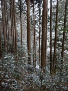 Snow Falling on Sugi_ Choshi Valley, Honjo
